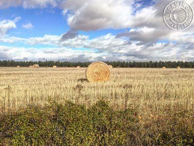 Camino_Frances_012