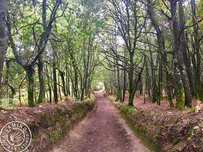 Camino_Frances_015